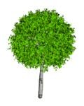 3d модели деревья 3d max