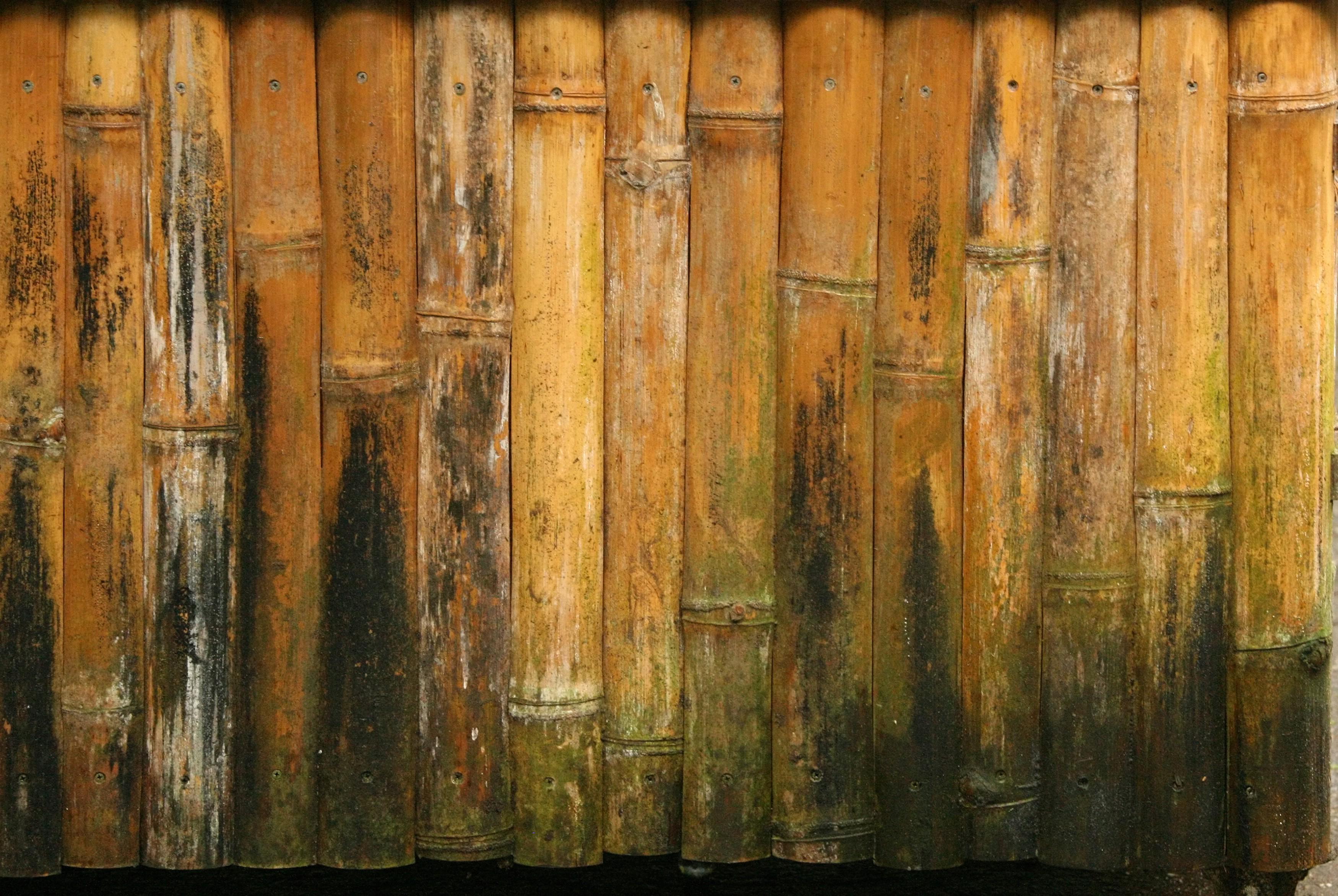 Кора дерева текстура коры дерева