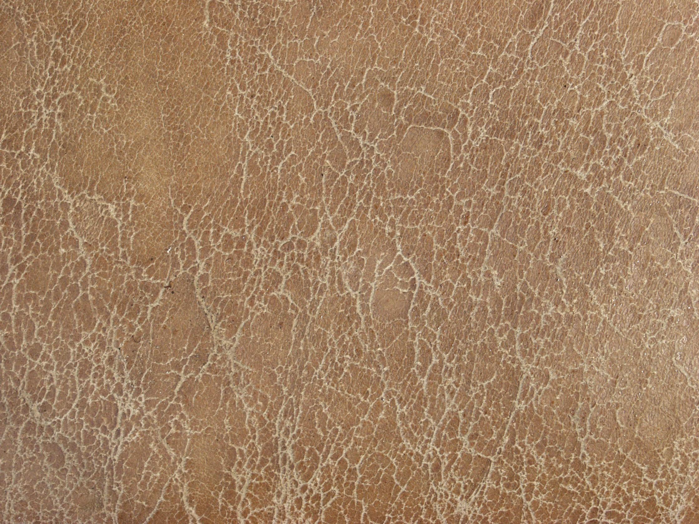 Текстура кожи | Текстура кожи ...: junior3d.ru/texture/kozhaMlekopitayushhikh.html