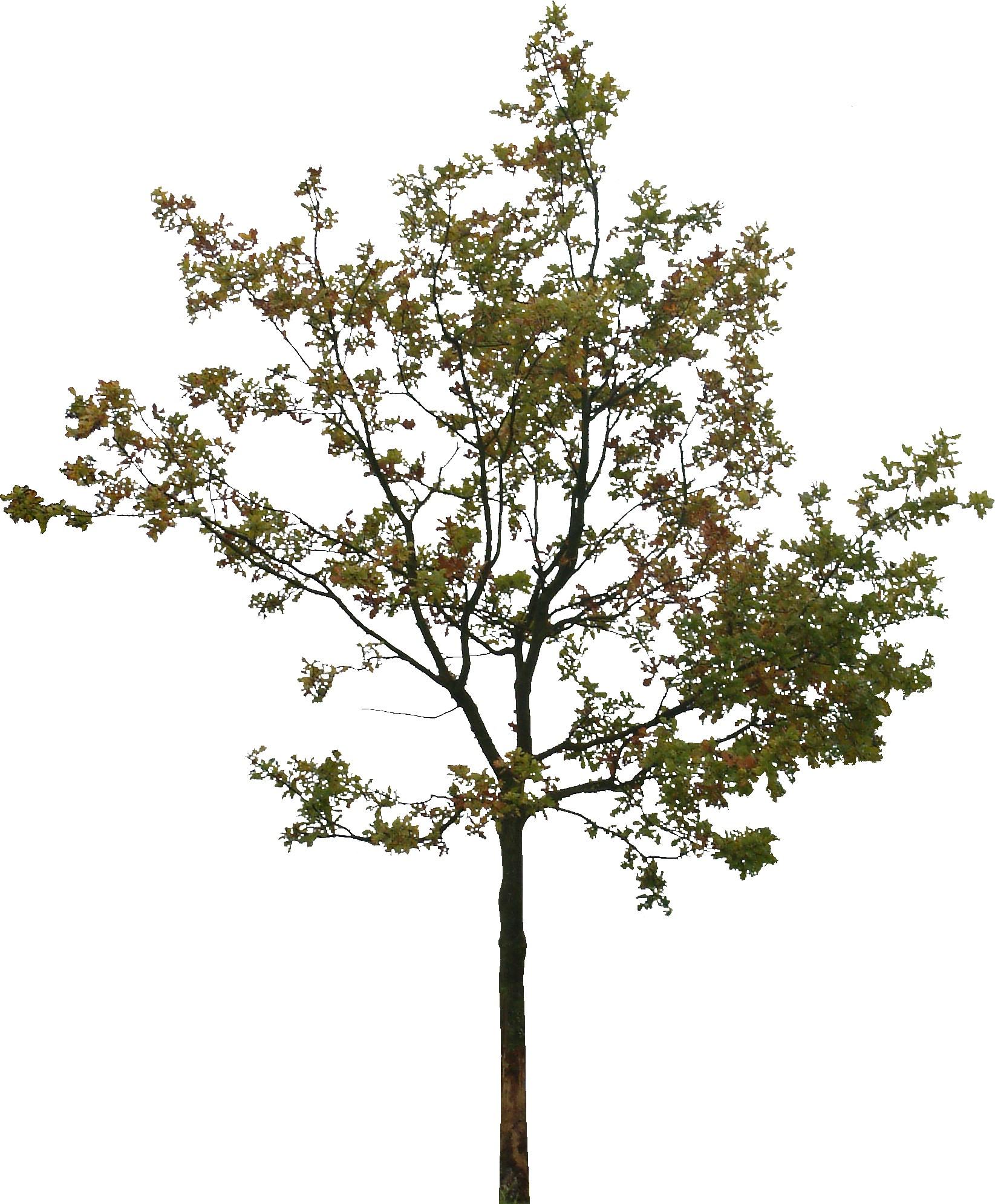 Текстура деревьев
