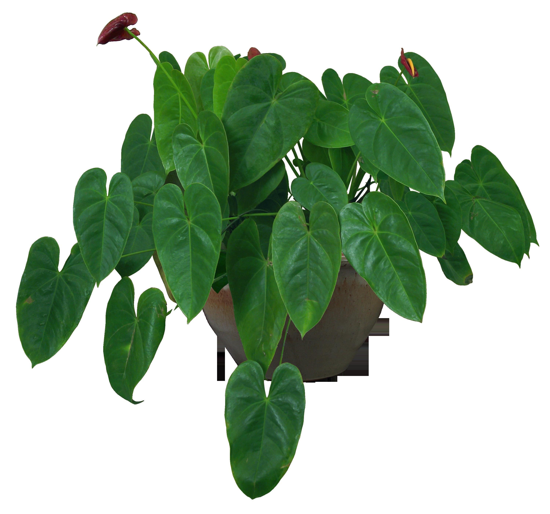 Текстура комнатных растений