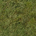 Текстура травы бесшовные текстуры