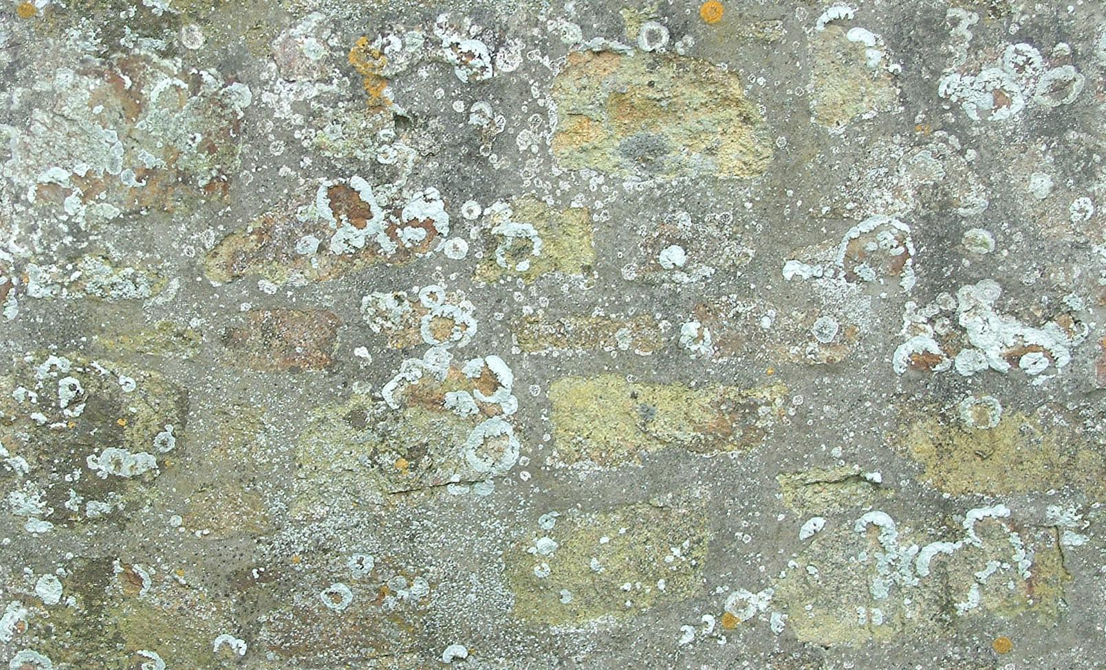 Текстура старого бетона керамзитобетон d1600 технические характеристики